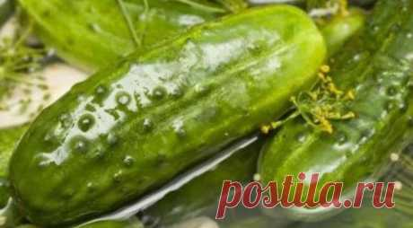 Popular cold way of salting of cucumbers for the winter, the step-by-step recipe from a photo