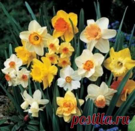 Значение цветов - Садоводка