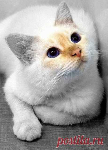 В мечтах о прекрасном! О чем думают наши коты!?  Хоть бы на секундочку послушать..