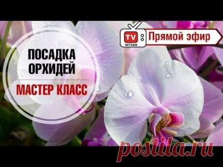 ¿Cómo trasplantar la orquídea? \ud83c\udf3a el maestro la clase en directo