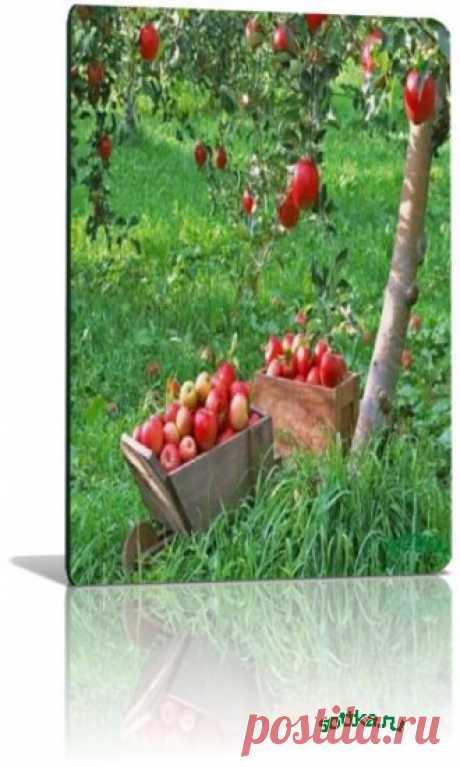 Создаем плодовый сад