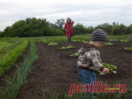 с внуком на огороде