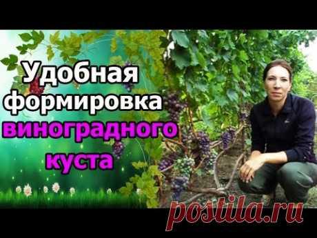 #Виноград. #ФормированиеКустов