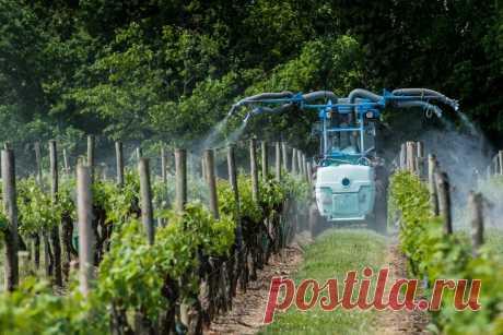 Уход за виноградом весной требует немного времени и много знаний