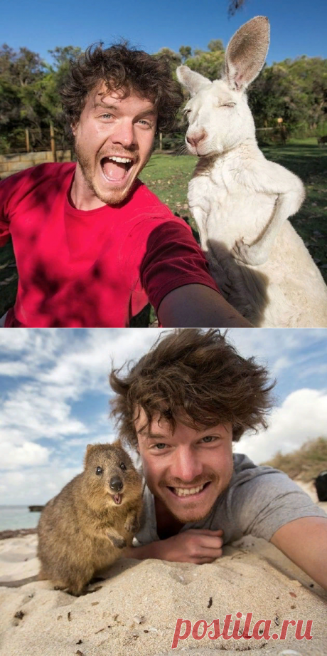 Аллан Диксон: когда ты умеешь мастерски фотографироваться с животными — Фотошедевры