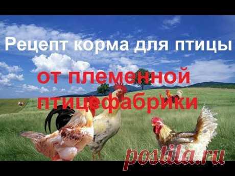 2 СУПЕР рецепта корма для бройлеров, уток и другой птицы от племенной птицефабрики