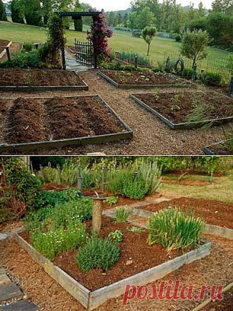 «Вредные» советы огородникам и садоводам | 6 соток