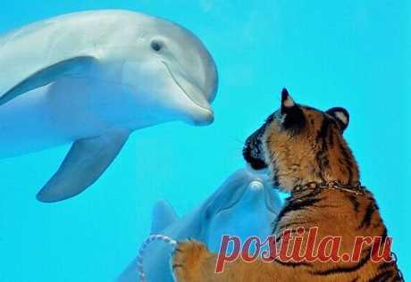Аквапарк. Тигрица и дельфины