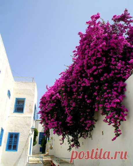 Сиди-Бу-Саид(Sidi Bou Said),Тунис.