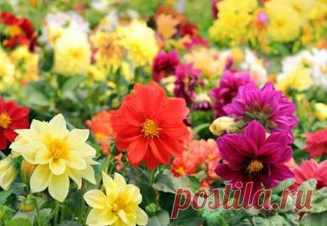 15 culturas de flores, que es necesario sembrar a las plantas en abril