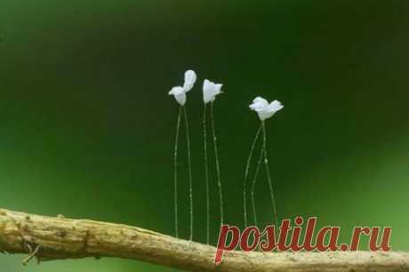 Топ-25: Редкие и потрясающе красивые цветы | Yatodzen | Яндекс Дзен