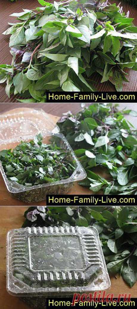 Как заготовить базилик на зиму - пошаговый фоторецепт - заготовка на зиму | Кулинарные рецепты