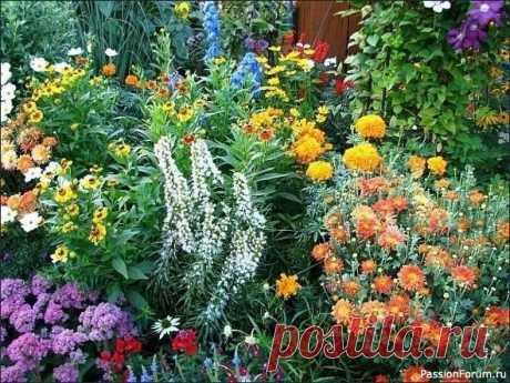 10 многолетников, цветущих всё лето! Часто начинающие цветоводы интересуются, какие многолетники цветут все  лето. Именно для них мы нашли подборку самых красивых, на наш взгляд,  цветов, которые должны понравиться и остальным.