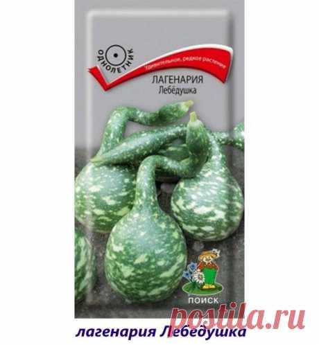 Знакомимся с интересными сортами чудо-тыквы лагенарии