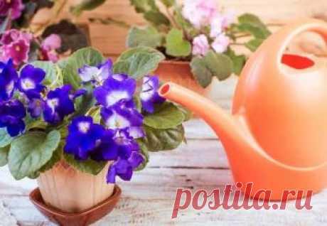 Перекись водорода — уникальное удобрение для комнатных цветов | Цветы в квартире и на даче – от Радзевской Виктории | Яндекс Дзен