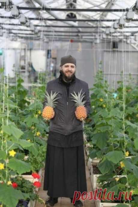 Монахи вырастили экзотический фрукт - 3 фото - Нет скуки - Сайт хорошего настроения