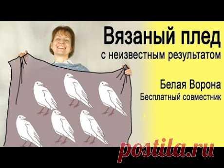 """Бесплатный открытый совместник """"Белая ворона"""""""