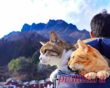 Котики - это наше всё!   KotoMail.ru