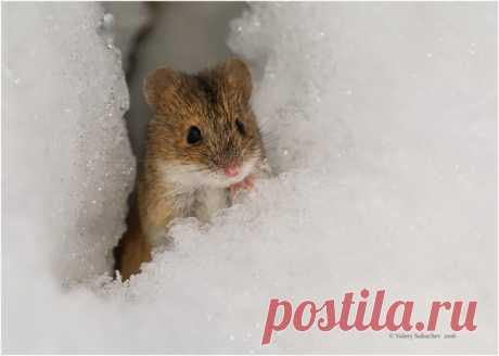 Мышка в Сокольниках. Автор фото — Валерий Субачев: