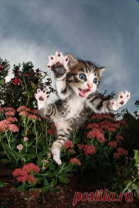 Как думаете, на этой фотографии котенок напуган или весел? Исследования показывают: мы по-прежнему мало знаем о наших пушистых питомцах.