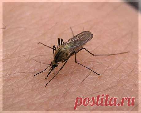   Как устранить зуд и отек от комариных укусов  