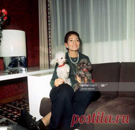 die-italienische-sopranistin-maria-callas-mit-ihren-beiden-pudeln-auf-picture-id1213186552 (1999×1926)