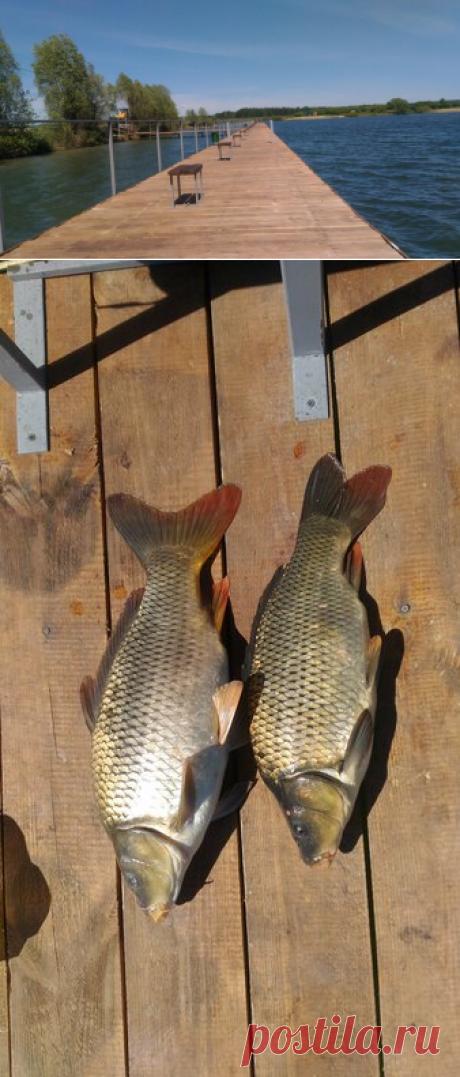 Субботняя карповая рыбалка на платнике.