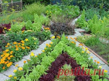 Дружба и в царстве растений возможна. Растения-компаньоны Вы когда-нибудь обращали внимание, что посадишь рядом две культуры, и они друг друга как бы поддерживают? Например, вредители, которые обычно уничтожают урожай,