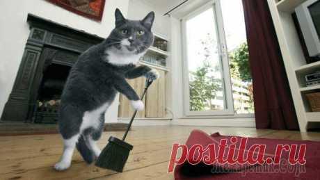 Как удалить запах кошачьей мочи в квартире, доме? Средства от запаха кошачьей мочи - МирТесен