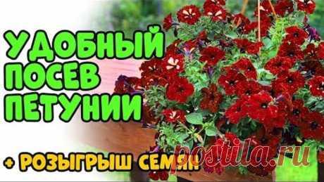 ТЕПЕРЬ ПЕТУНИЮ БУДУ СЕЯТЬ ТАК! Розыгрыш семян