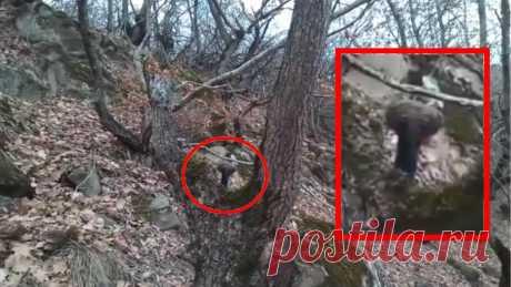 ЧТО ЭТО ИНОПЛАНЕТЯНИН ИЛИ СТРАННОЕ СУЩЕСТВО В ЛЕСУ АЗЕРБАЙДЖАНЕ. мифические существа среди нас. Турист встретил загадочное существо в лесу азербайджана. неизвестное существо пряталось, существо был похож на инопланетянина, рост приблизительно 60 или 80 сантиметров