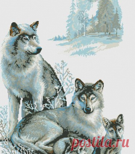 Волчья семья/Схема
