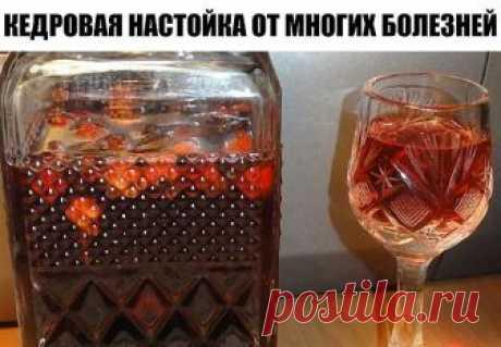 КЕДРОВАЯ НАСТОЙКА ОТ МНОГИХ БОЛЕЗНЕЙ  ИНГРЕДИЕНТЫ:  1 стакан кедровых орехов (со скорлупой, какие-то из них можно раздавить, измельчить хотя бы половину стакана),  150 г (примерно стакан) сахара, 0,5 л (бутылка) водки.  ПРИГОТОВЛЕНИЕ:  Орехи и сахар залить водкой и поставить в тёплое темное место на 14 дней. Смесь ежедневно встряхивать.  И делать-то ничего не надо, только встряхивать бутылку, иначе сахар плохо растворяется. Через 14 дней процедить. То, что осталось залить ...