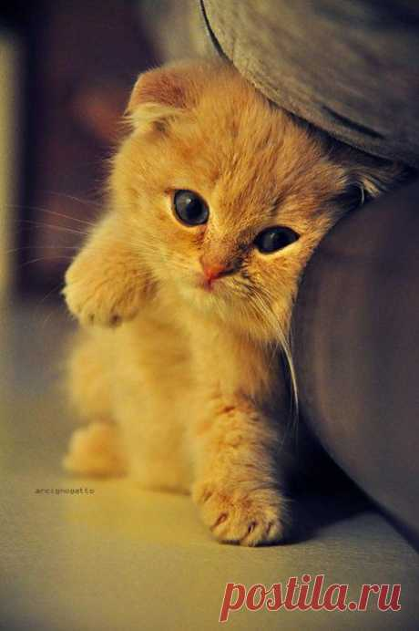Kittys Are Cute