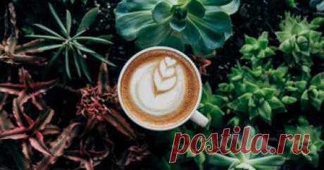 Кофе оказался средством против старения мозга Открытие сделали ученые Ратгерского университета (США).