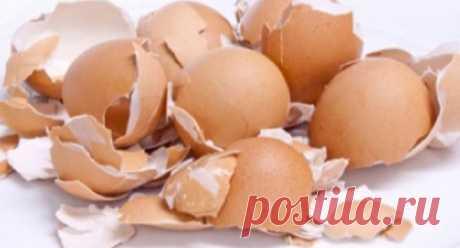 Никогда не выбрасывайте яичную скорлупу! Вот некоторые удивительные возможности их использования! - Полезные советы красоты