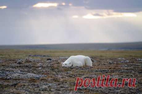 «Одиночество». Полуостров Таймыр, Россия. Автор фото — Артем Гнатенко: