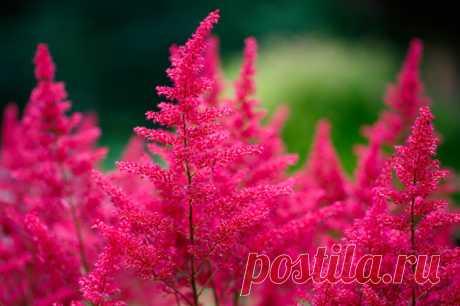 В закладки: Топ-10 цветущих растений для сада в тени Используйте этот список, чтобы ваш сад был в цвету с мая по октябрь