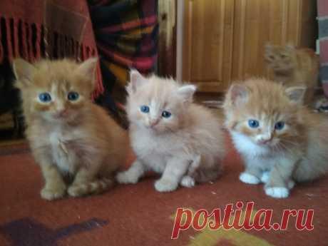 Кошеня в добрі руки - Коти Івано-Франківськ на board.if.ua код оголошення 55349