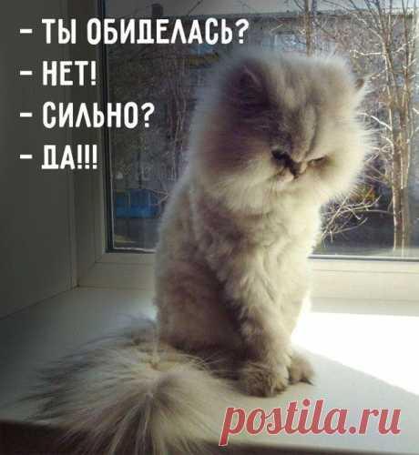 Самые смешные открытки с котиками. Хорошее настроение гарантировано!