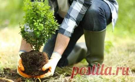 15 faltas más frecuentes a la plantación de las plantas decorativas