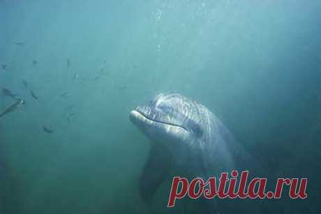 Поговорить в дельфином О языке дельфинов и разумности Беседа с Владимиром Марковым, научным сотрудником Института проблем экологии и эволюции.