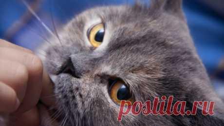 ¿Cómo comunicarse con el gato? Los mitos y los errores | los Animales