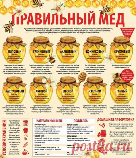 Выбирайте правильный мед - Семья и дом - медиаплатформа МирТесен
