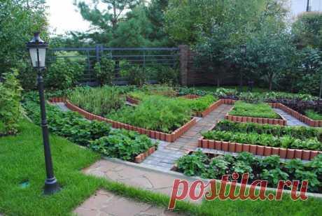 Как правильно подпитывать садовые и овощные культуры   6 соток