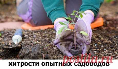 Хитрости опытных садоводов: йод для растений | 6 соток