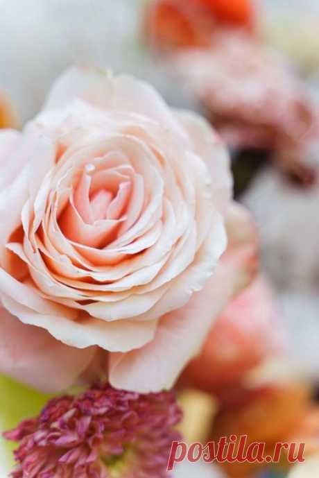Прогулки до рассвета: свадьба в теплой оранжевой палитре 🧡