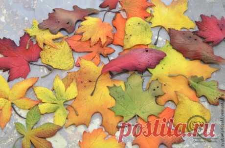 Создаем осенние листочки из фоамирана: часть 1 | Журнал Ярмарки Мастеров