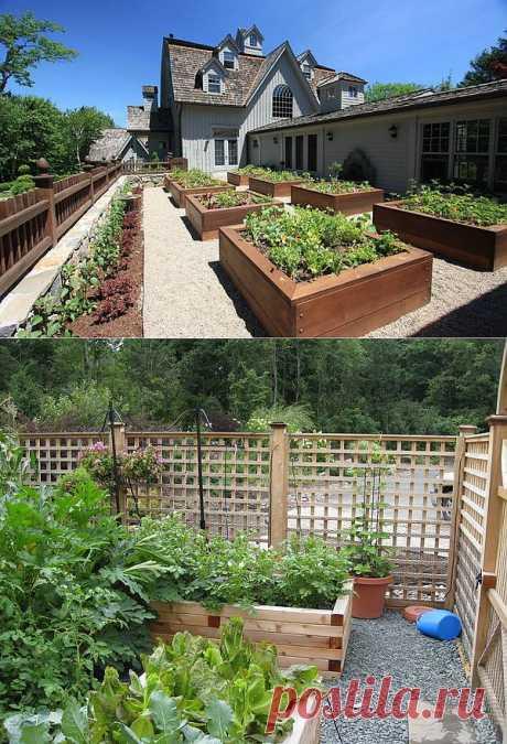 Примеры оформления огородных грядок.