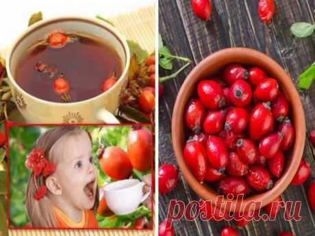Плоды шиповника лечебные свойства, противопоказания применения